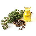Caster Seed Oil