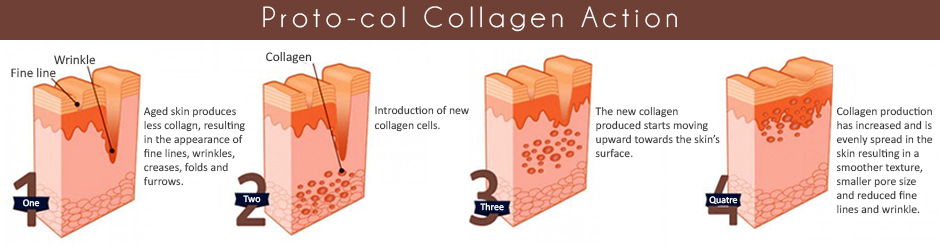 Steps for Collagen Production