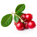 Bearberry plant Extract